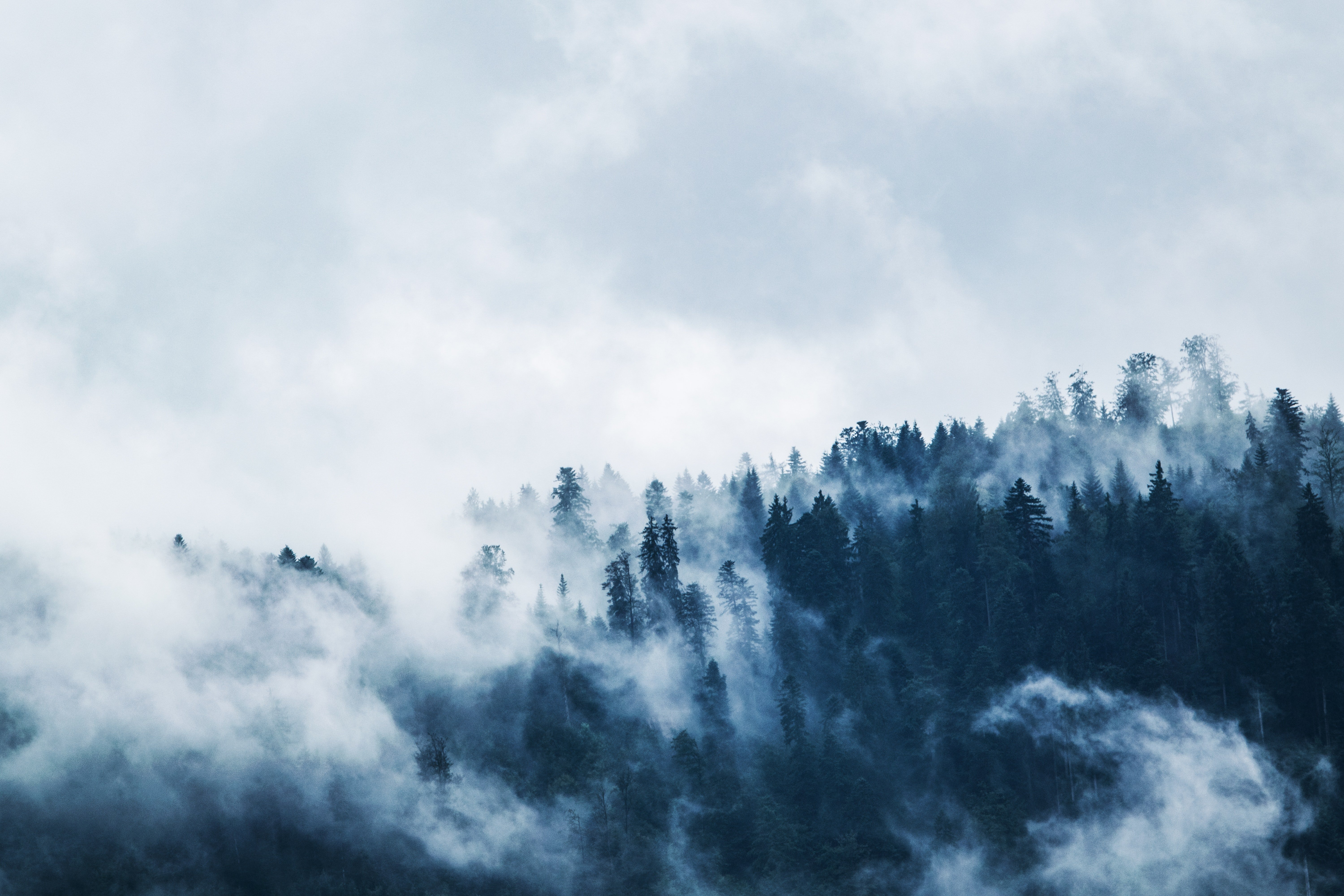 green-pine-trees-covered-with-fogs-under-white-sky-during-167699